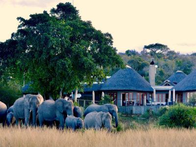Nambiti Lodge